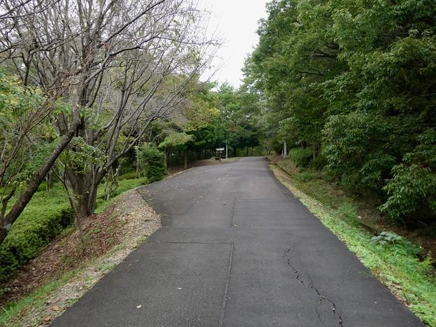 日本ラインうぬまの森:眺望の丘から頂上へと向かう舗装された道(さえずりの道?)