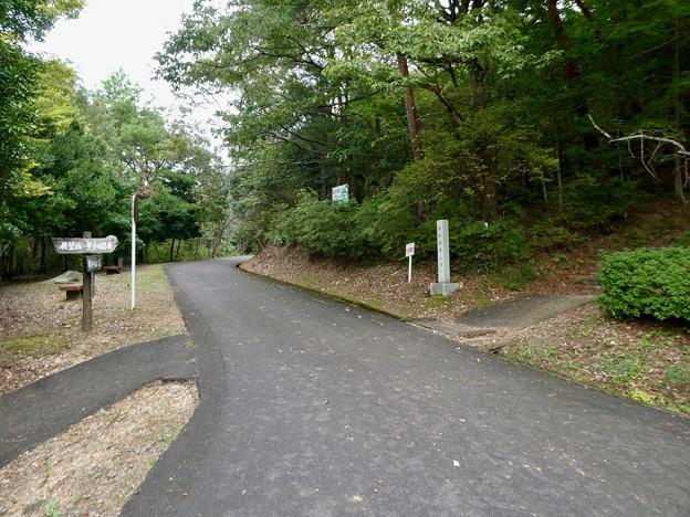 日本ラインうぬまの森:眺望の丘近くの分かれ道