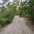 日本ラインうぬまの森:展望台手前の登山道 - 2