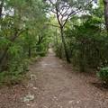 日本ラインうぬまの森:展望台手前の登山道