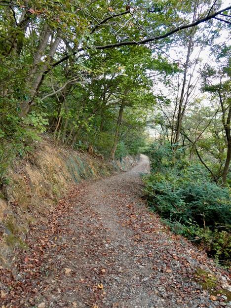 日本ラインうぬまの森:眺望の道 - 7