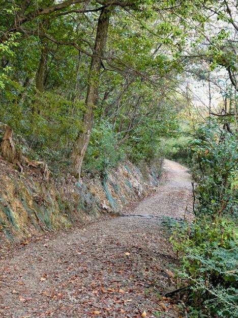日本ラインうぬまの森:眺望の道 - 8