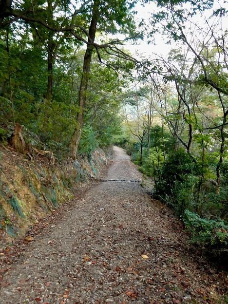 日本ラインうぬまの森:眺望の道 - 9