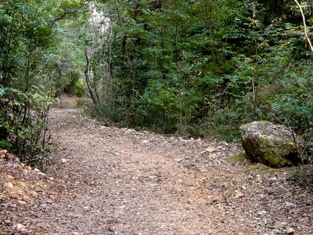 日本ラインうぬまの森:眺望の道 - 14