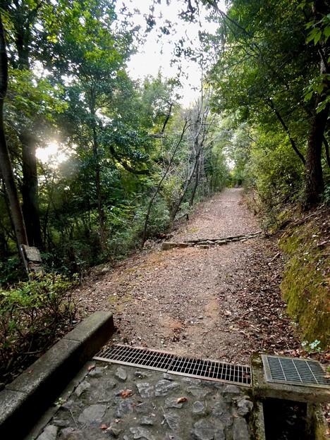 日本ラインうぬまの森:眺望の道 - 16