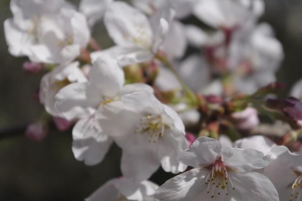 2021年度の桜
