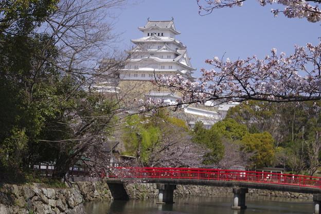 2021姫路城のさくら