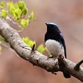 夏の青い鳥