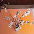 Photos: さくらんぼの花