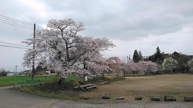 桜2021_02