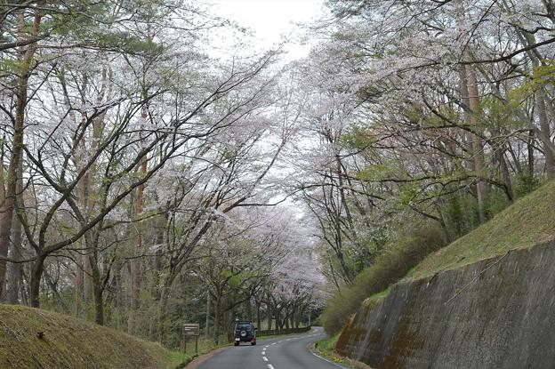 桜2021_08
