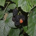 Photos: Black Berry2021