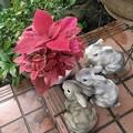 Photos: 3匹のウサギと赤い葉の植木鉢