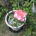 Photos: Rose2021 part2
