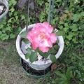 Rose2021 part3