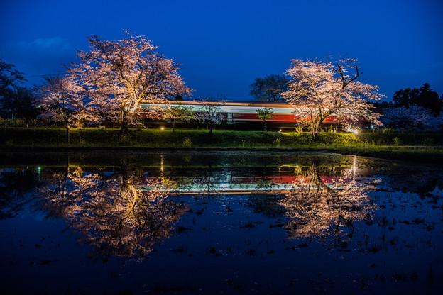 ローカル列車と夜桜
