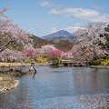 桜庭園 1