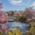 桜庭園 2