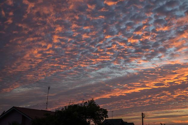 夕焼けひつじ雲