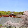 二ノ丸史跡庭園を望む
