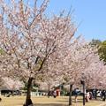 Photos: 城山公園