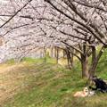 Photos: 僕(犬)もお花見
