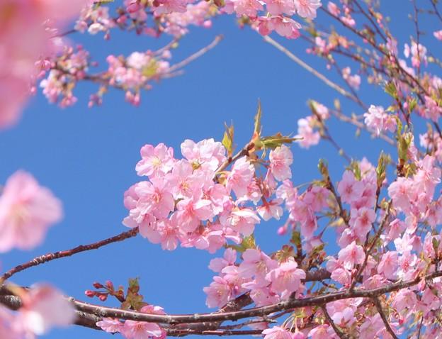 Photos: 青空の下(もと)に咲く