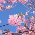 青空の下(もと)に咲く