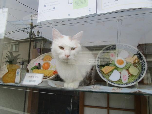 看板猫だニャ(=^・^=)