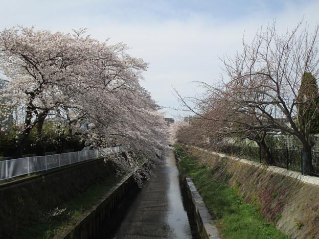 切敷川 (5)