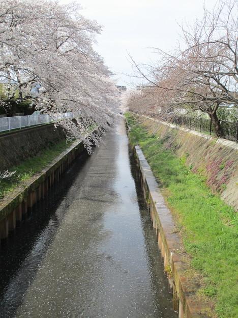切敷川 (6)