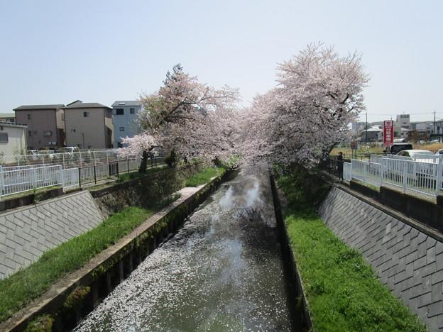 切敷川 (1)