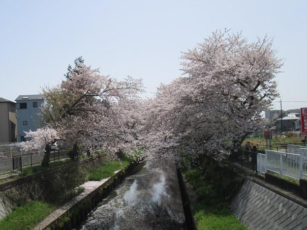切敷川 (4)