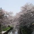 切敷川 (8)