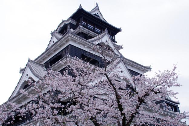 2021 春の熊本城天守閣