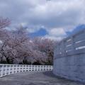 Photos: 桜回廊