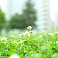 Photos: 春の記憶