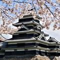 松本城の桜1