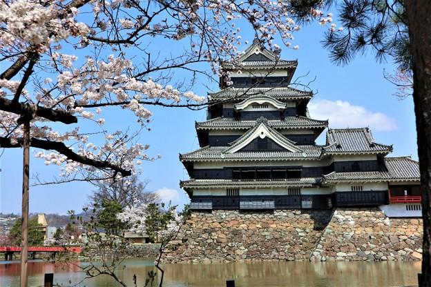 松本城と桜55