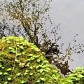あざみ池 水面