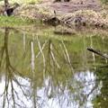 アザミ池1