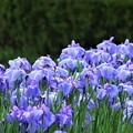 Photos: 紫一色