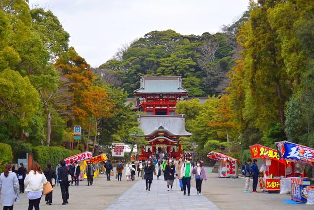 鶴岡八幡宮境内 #鎌倉 #湘南 #kamakura #神社 #shrine #花 #flower