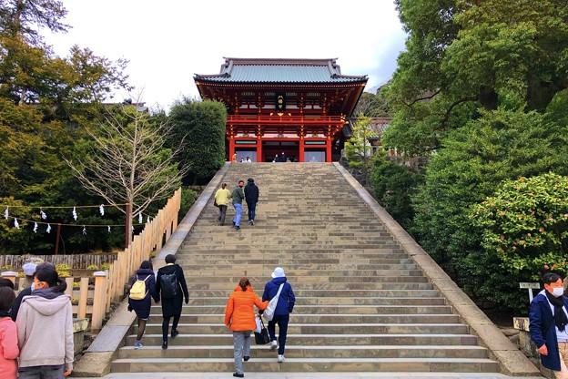 曇り空の鶴岡八幡宮 #鎌倉 #湘南 #kamakura #神社 #shrine #花 #flower