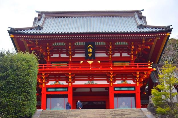 鶴岡八幡宮拝殿 #鎌倉 #湘南 #kamakura #神社 #shrine #花 #flower