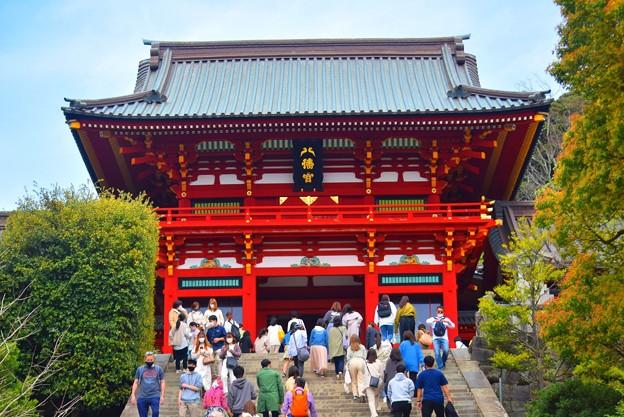 鶴岡八幡宮拝殿 #湘南 #鎌倉 #kamakura #shrine #flower #花 #桜 #cherryblossom