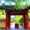行時山光則寺 山門 #湘南 #鎌倉 #kamakura #寺 #temple #flower #花 #紫陽花 #hydrangea