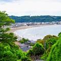 成就院から見る由比ヶ浜 #湘南 #鎌倉 #kamakura #寺 #temple #花 #flower #由比ヶ浜 #sea
