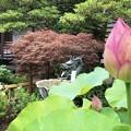 成就院境内 #湘南 #鎌倉 #kamakura #寺 #temple #花 #flower #紫陽花 #hydrangea