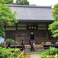 成就院本堂 #湘南 #鎌倉 #kamakura #寺 #temple #花 #flower #紫陽花 #hydrangea